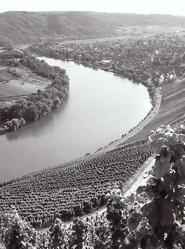 Andrzej Greszta Krov vineyards