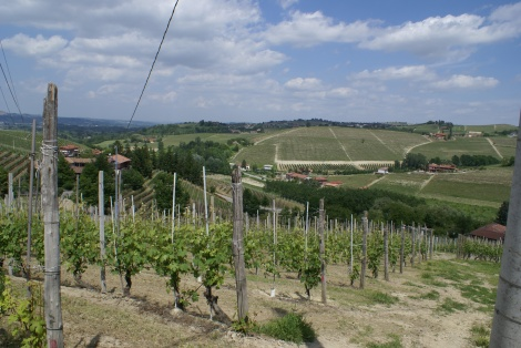 Ovello vineyard Barbaresco Italy