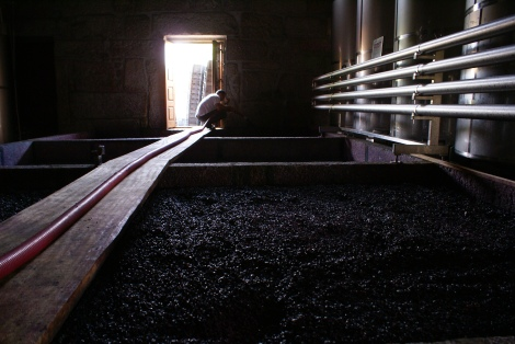 Quinta do Pai Americo / Seacampo winery lagar open fermentation